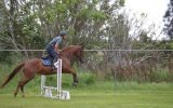 Lovely mare - suit jumping/eventing on HorseYard.com.au (thumbnail)