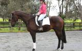 This lovely big QUIET horse has done a bit of everything. on HorseYard.com.au (thumbnail)