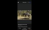 Hazy 15hh Fast and fun , agile all rounder  on HorseYard.com.au (thumbnail)
