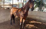 Blank Canvas -Ready to go on with  on HorseYard.com.au (thumbnail)