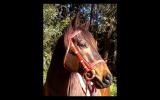 Mishani Phoenix  on HorseYard.com.au (thumbnail)