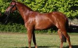 STUNNING NEWCOMER PONY on HorseYard.com.au (thumbnail)
