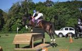 Proven Schoolmaster on HorseYard.com.au (thumbnail)