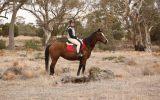 Sassy but fun! on HorseYard.com.au (thumbnail)