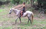 Quiet, Trustworthy Quarter Horse x Stock Horse on HorseYard.com.au (thumbnail)