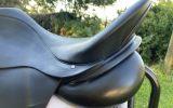 Albion Platinum on HorseYard.com.au (thumbnail)