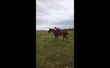 Oakey on HorseYard.com.au (thumbnail)