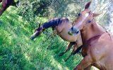 Savannah on HorseYard.com.au (thumbnail)
