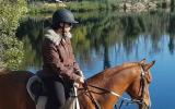 Purebred Arabian Gelding on HorseYard.com.au (thumbnail)