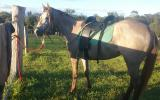 Skylah- a real stunner on HorseYard.com.au (thumbnail)