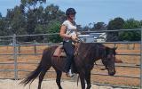 Heritage listed stockhorse mare on HorseYard.com.au (thumbnail)