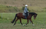 Quiet stunning bay gelding on HorseYard.com.au (thumbnail)