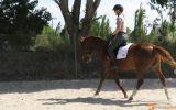 Lovely 14.2hh quarter horse allrounder  on HorseYard.com.au (thumbnail)