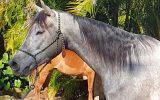 Anglo Arab gelding  on HorseYard.com.au (thumbnail)