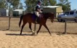 Reg QH Mare on HorseYard.com.au (thumbnail)