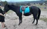 Henry on HorseYard.com.au (thumbnail)