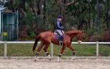 Big Bold and Blingy on HorseYard.com.au (thumbnail)