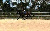 Mischa on HorseYard.com.au (thumbnail)