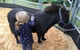 Beginners pony  on HorseYard.com.au (thumbnail)