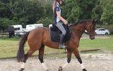 Seriously Flash OTTB Gelding!! on HorseYard.com.au (thumbnail)