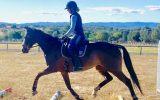 SUPERCONDUCTOR on HorseYard.com.au (thumbnail)