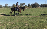 Quiet and Talented Allrounder on HorseYard.com.au (thumbnail)