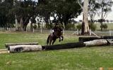 Quiet Warmblood Mare - Breed or Ride on HorseYard.com.au (thumbnail)