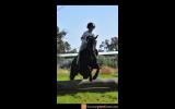 Sanlirra Dior on HorseYard.com.au (thumbnail)