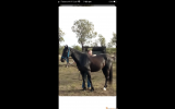 Handsome gelding with potential  on HorseYard.com.au (thumbnail)