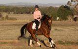 Kind OTTB Gelding  on HorseYard.com.au (thumbnail)
