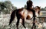 Cheap Warmblood Mare Lease or Buy on HorseYard.com.au (thumbnail)