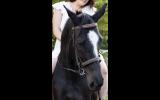 Ally  on HorseYard.com.au (thumbnail)