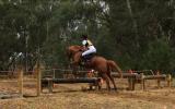 ASH x QH Mare on HorseYard.com.au (thumbnail)