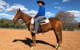 Hard Hat Henry Gelding on HorseYard.com.au (thumbnail)