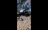 Showjumping school mistress - BERRIVALE sky blue on HorseYard.com.au (thumbnail)