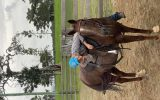 Beautiful Roan QH x mare  on HorseYard.com.au (thumbnail)