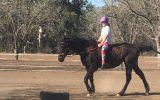 Quiet mare on HorseYard.com.au (thumbnail)