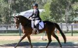 *Price Reduced* Classy Broodmare on HorseYard.com.au (thumbnail)
