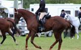 Superstar Dressage Mare on HorseYard.com.au (thumbnail)