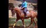 Potential plus TB gelding  on HorseYard.com.au (thumbnail)