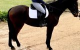 Eventing Potential Plus  on HorseYard.com.au (thumbnail)