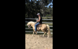 Gelding  on HorseYard.com.au (thumbnail)