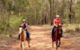 Stock horse gelding 15.1hh 5yrs on HorseYard.com.au (thumbnail)