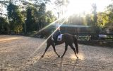 Lovely, quiet attractive workhorse for sale on HorseYard.com.au (thumbnail)