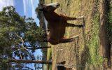 Clydie X Pleasure Mount on HorseYard.com.au (thumbnail)