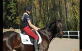 Ally WB x TB on HorseYard.com.au (thumbnail)