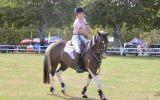 Talented Jumper  on HorseYard.com.au (thumbnail)