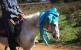 Very quiet beginners Welsh x, done pony club. on HorseYard.com.au (thumbnail)