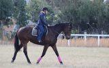 Tb mare  on HorseYard.com.au (thumbnail)
