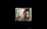 Pally Colt - QH  on HorseYard.com.au (thumbnail)